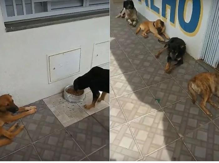 Бездомные собаки каждое утро выстраиваются в очередь за завтраком в Бразилии Бразилия, Собака, Добрые дела, Видео