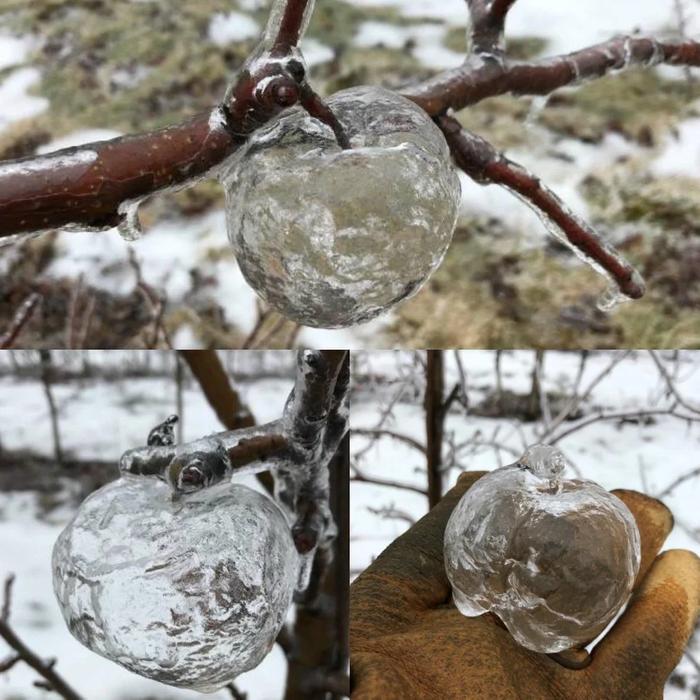 """Это """"Призрачное яблоко"""" Необычное, Лёд, Холод, Яблоки, Перевод"""