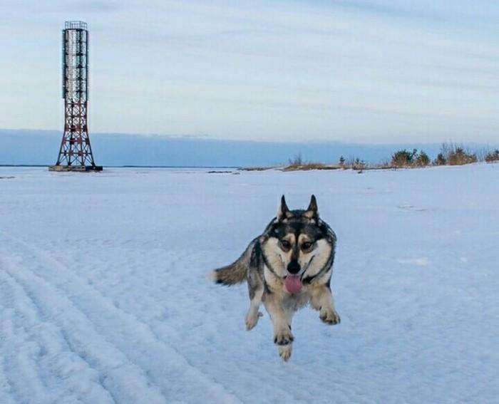 Летающий пес ) Собака, Полет, Зима, Снег, Маяк