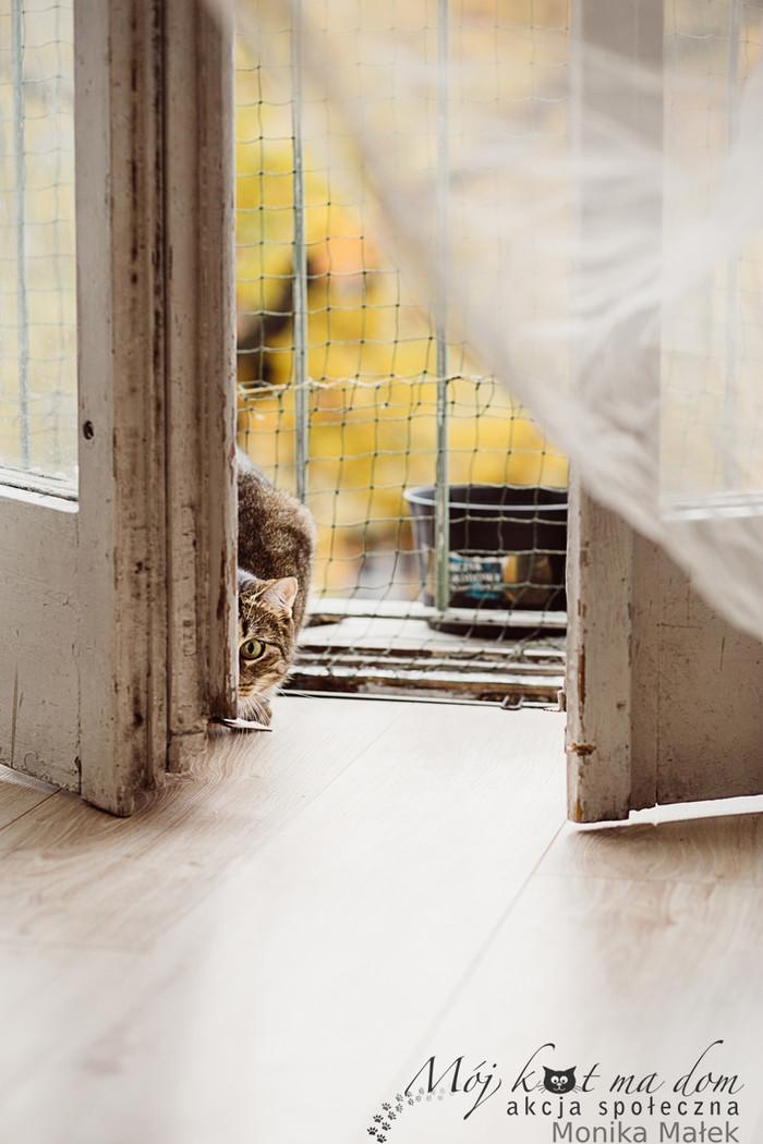 Моника Малек, котограф. Кот, Котомафия, Фотография, Фотограф, Длиннопост