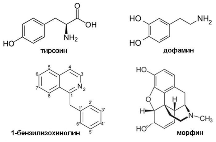 Секвенирование генома мака показало, как и когда в нем начал вырабатываться морфин Мак, Морфин, Начало, Длиннопост