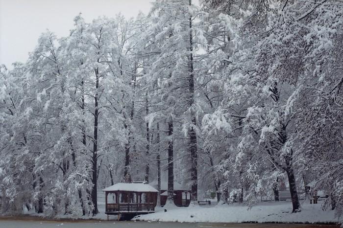 Новый год в Закарпатье Фотография, Фотопленка, Длиннопост