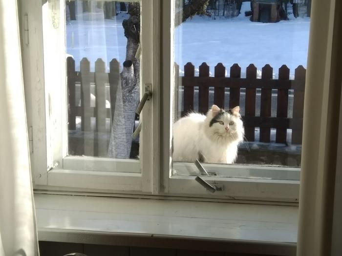 Соседка Кот, Окно