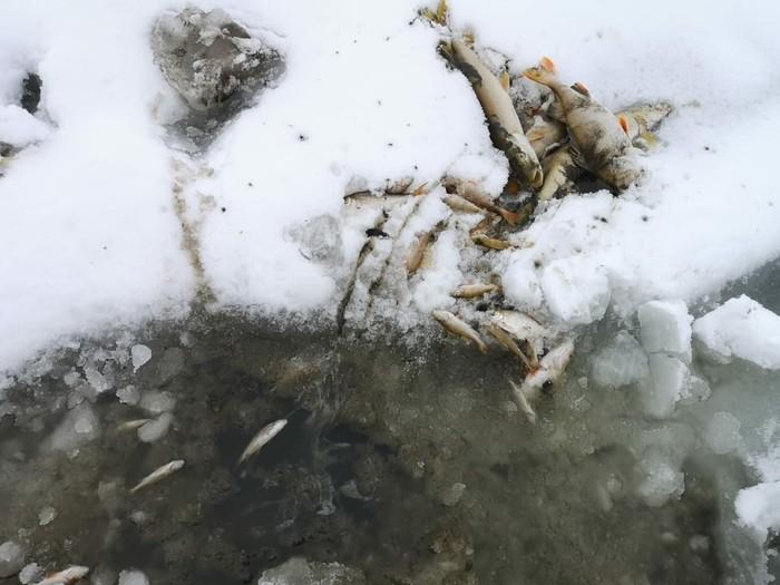 Рыбалка удалась. Экологическая катастрофа, Рыбалка, Длиннопост, Негатив