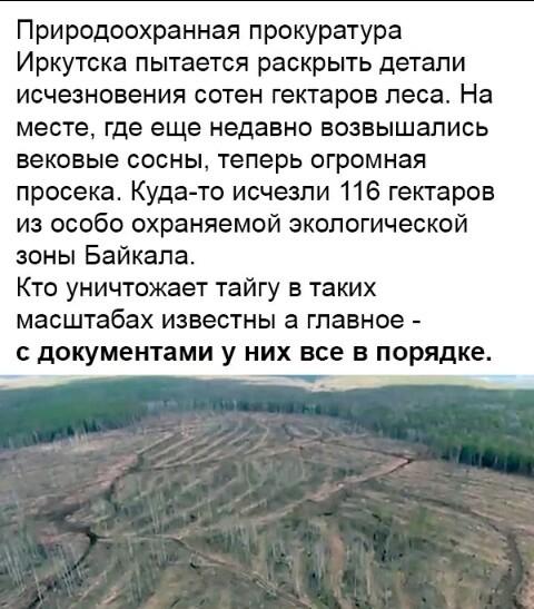 Интересные новости... Иркутск, Лес, Вырубка, Новости