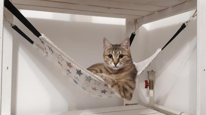 Ты никогда не будешь так же крут, как эта кошка Кот, Крутость, Гамак