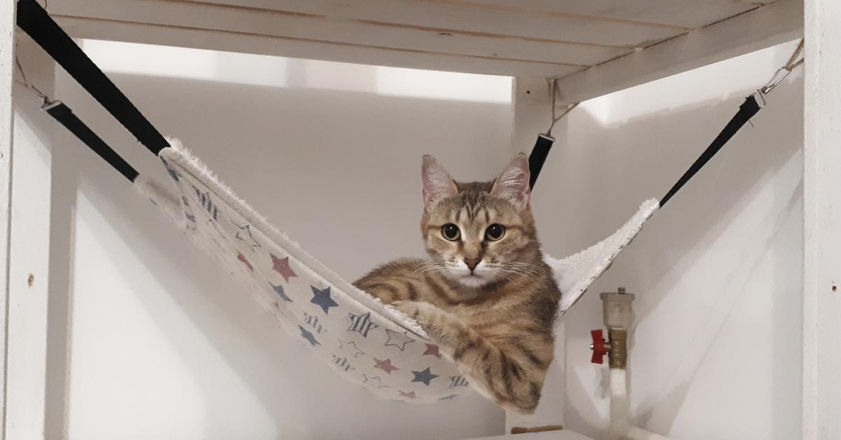 Картинки кошка в гамаке