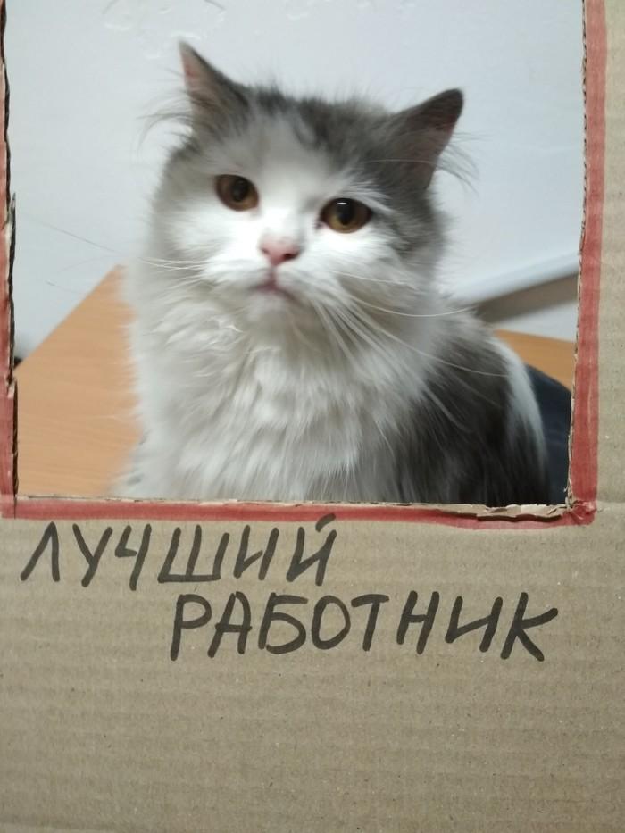 Как кошка взяла свою судьбу в свои лапки Найденыш, Судьба, Длиннопост, Кот