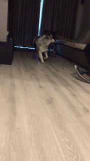 Кошка, играй!