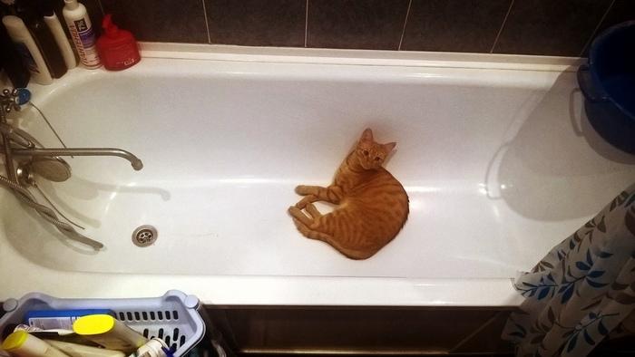 Живу как хочу))) Кот, Пофигизм, Домашние животные, Смешные животные