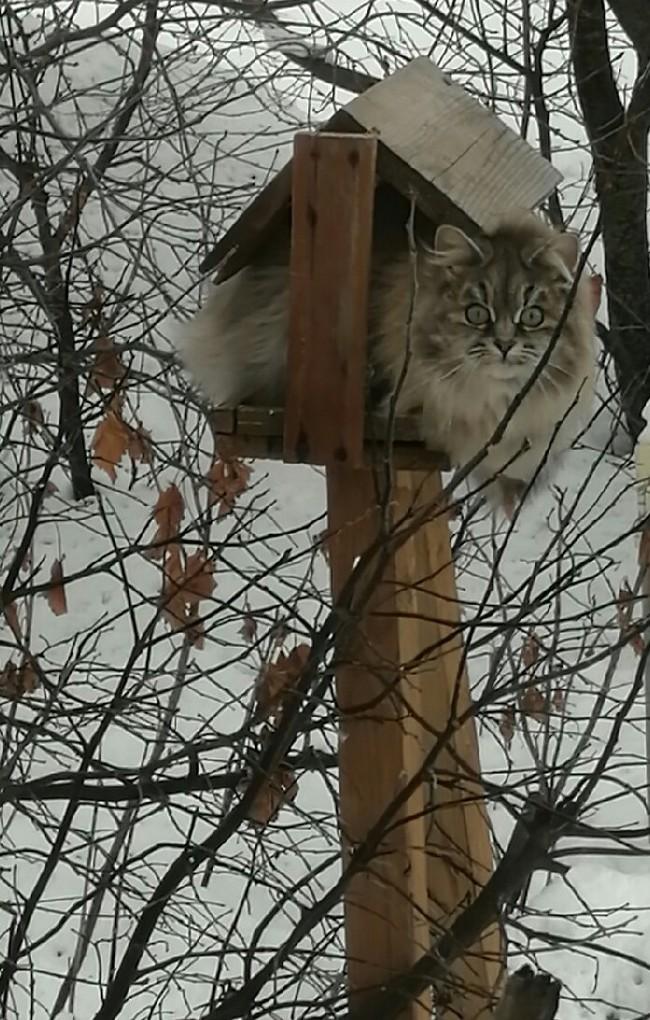 Слегка перекормленная синичка Кот, Кормушка для птиц, За окном, Зима