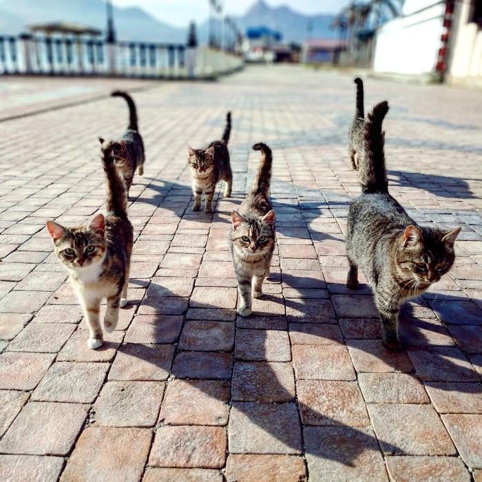 #котомафия Котомафия, Крым, Кот, Пушистый, Море, Коктебель