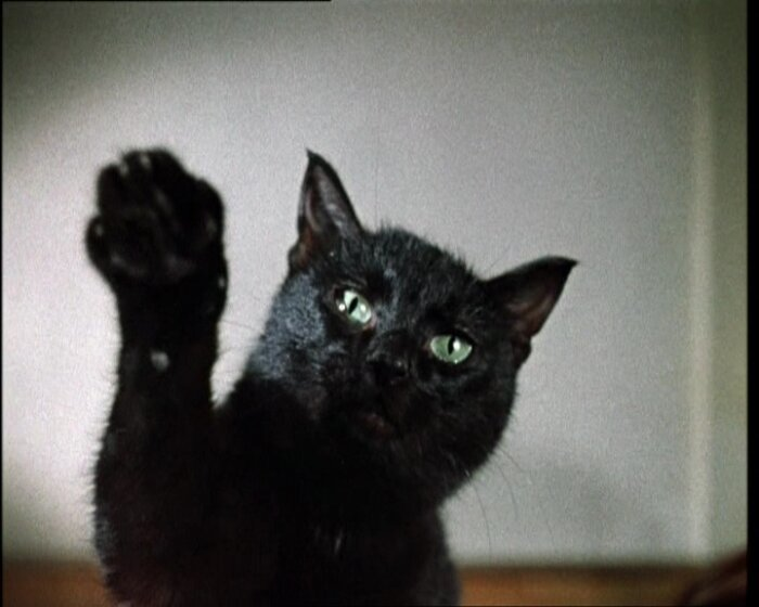 Как снимали животных в культовых советских фильмах Животные, Фильмы, Судьба, Длиннопост, Советское кино, Кот
