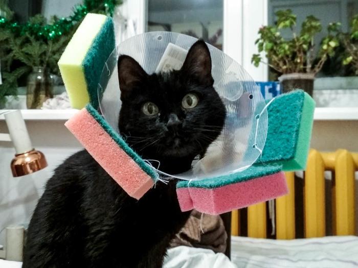 Нет повести кошмарнее на свете Кот, Кошачьи болезни, Люди и кошки, Длиннопост