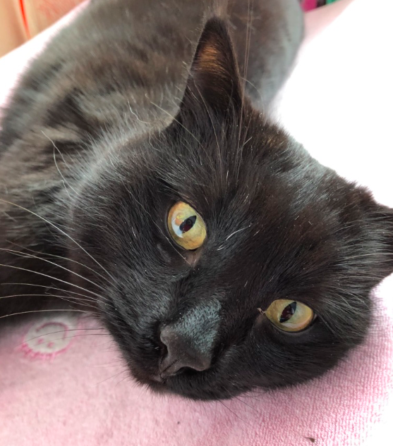 Кошка, вид сзади Кот, Ветеринария, Лечение кошек, Длиннопост