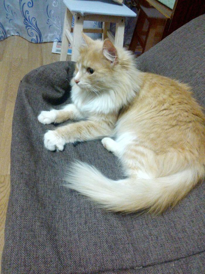 Как я кошку из подъезда забрала Кот, Ижевск, Длиннопост, Спасение животных