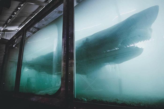 Заброшенный аквариум в Австралии Заброшенное, Акула, Парк, Австралия