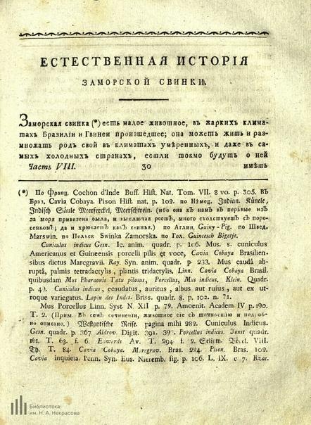 Морская свинка середины XVIII века Морская свинка, История, Библиотека, Старинные книги, Скан, Длиннопост