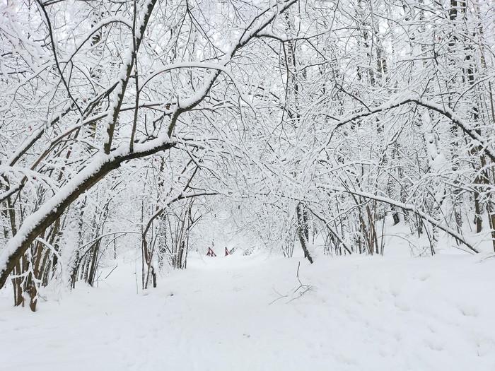 Волшебный реверанс зимы Фотография, Природа, Зима, Времена года, Битцевский парк, Длиннопост