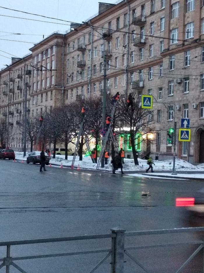 Снегири прилетели. СПб