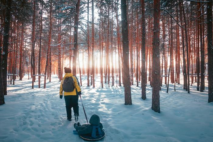 Я предпочел бы быть лесом, нежели улицей! Canon 500D, Лес, П Дубравная, Нижний Новгород, Фотография, Зима, Сосна