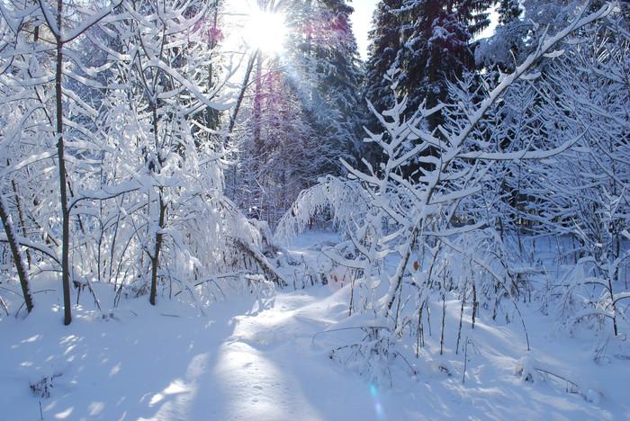 Зимний лес Фотография, Пейзаж, Зимний лес, Длиннопост