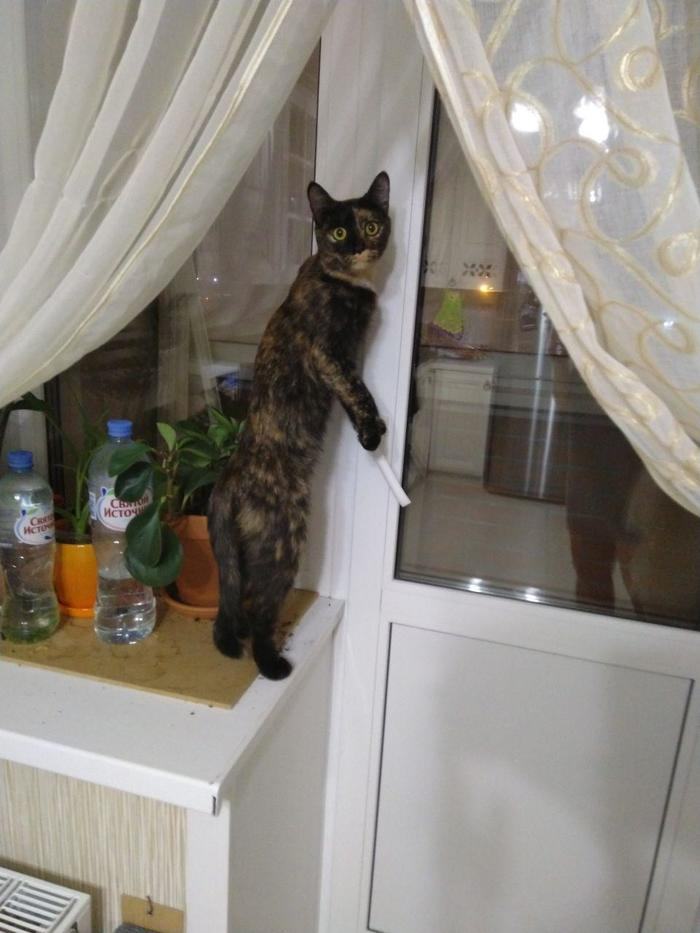 Когда пыталась незаметно пробраться на балкон, но тебя заметили.