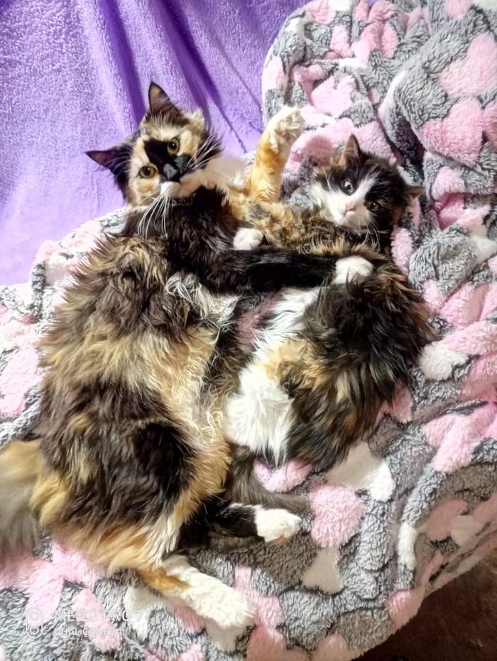Два кота лучше чем один