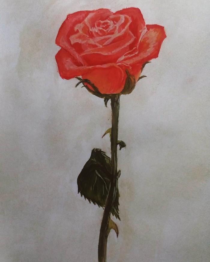 Алая роза Роза, Рисунок, Гуашь, День святого Валентина, Цветы, Длиннопост