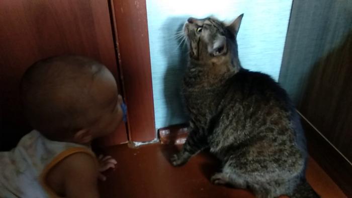 Коты и дети Кот, Питомец, Дети, Домашние животные, Животные