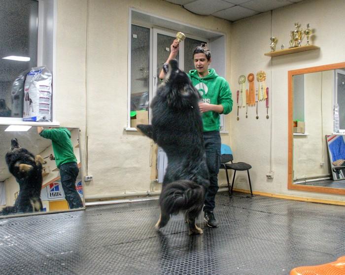 Занятия , занятиями. А дурилки по расписанию. Собаки и люди, Хендлинг, Тибетский мастиф, Собачники, Породы собак