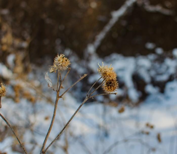 Прогулка по лесу Начинающий фотограф, Фотография, Лес, Nikon, Лэп, Длиннопост