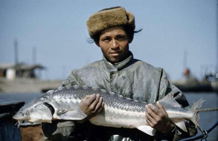 Как добывали черную икру в СССР