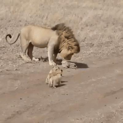 Трудности отцовства.