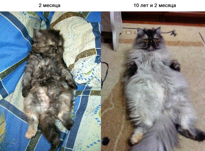 2009 vs. 2019 :) 10yearschallenge, Персидская порода, Кот
