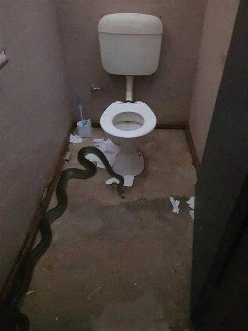 Случайно зашел в женский туалет