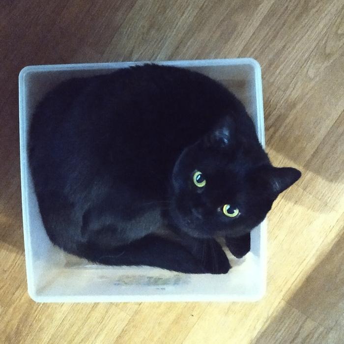 Компактная чёрная дыра Кот, Фото на тапок, Длиннопост