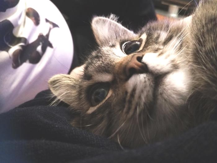 С такого ракурса котики такие смешные и милые)