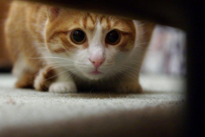 Он всегда следит за тобой Кот, Взгляд, Рыжий, Длиннопост