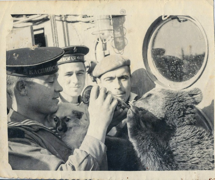 Из семейного архива Фотография, Медведь, Моряки, Милота