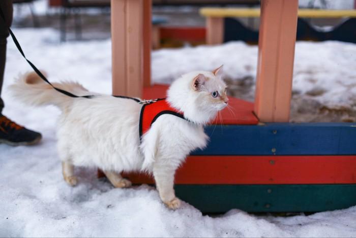 Белкин вышел погулять. Кот, Прогулка, Смельчак, Домашние животные