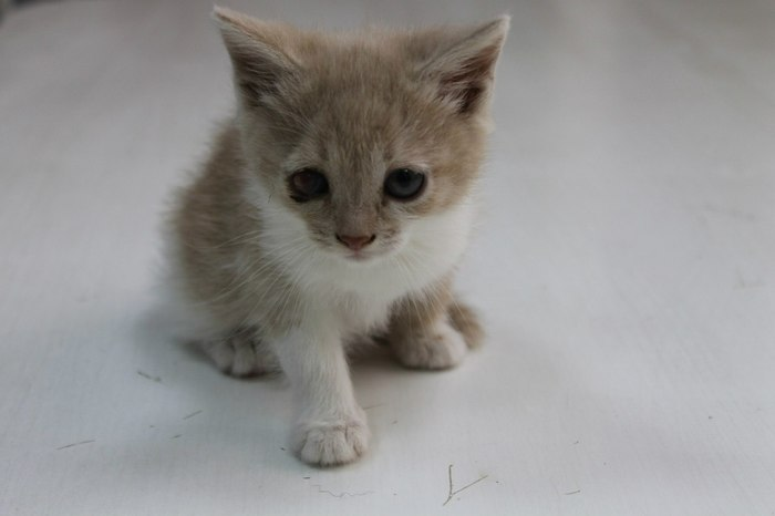 Котопост добра и любви! Кот, Котомафия, До и после, Вырос, Фото на тапок, Длиннопост