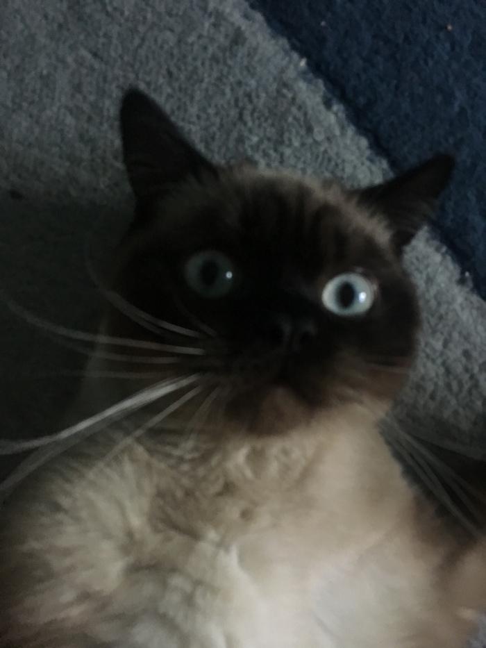 Кошачий заговор Кот, Заговор, Котоселфи, Домашние животные
