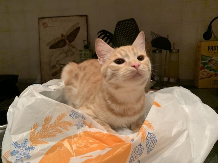 «Мне идёт этот пакет?»