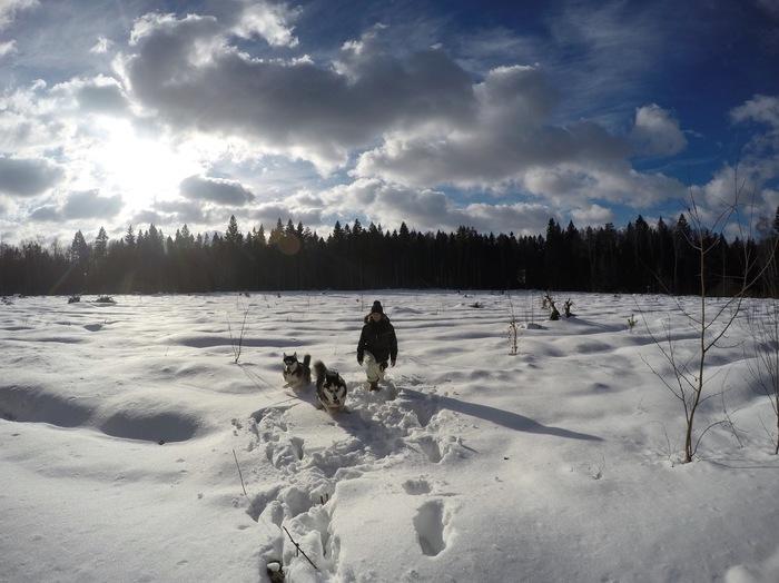 Хочется написать с хасями на прогулке в Сибири, но нет, всего лишь Подмосковье.