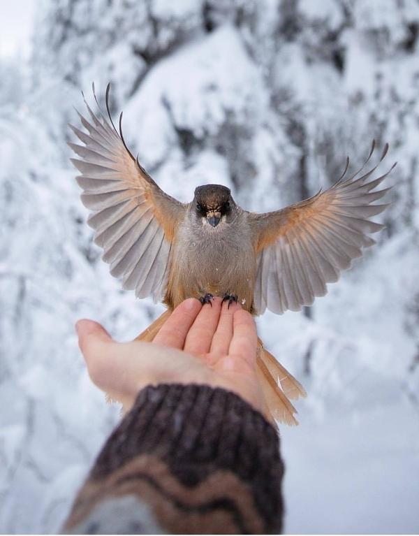 Орёл!