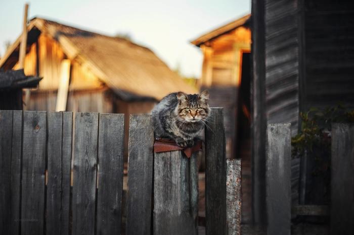 Назаборные коты Кот, Фотография, Природа, Длиннопост, Домашние животные
