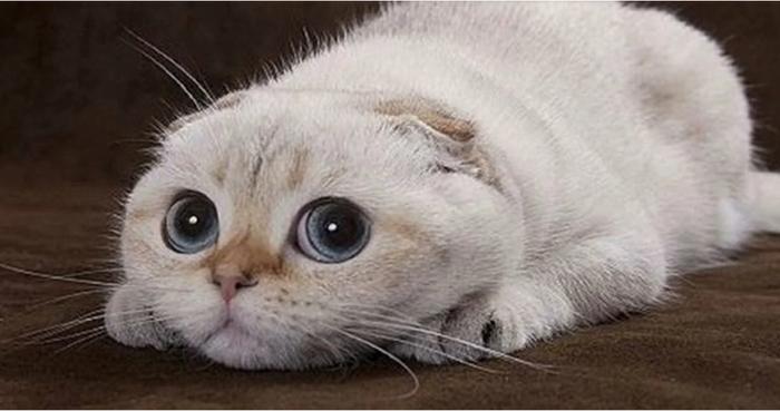 Как правильно ругать кошку Воспитание питомца, Люди и кошки, Кот, Длиннопост, Домашние животные