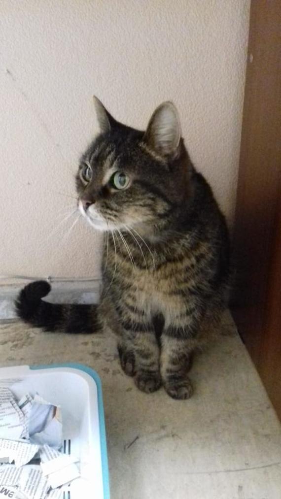 Котёнок ищет дом Из рук в руки, Кот, Котята, В добрые руки, Санкт-Петербург, Длиннопост, Домашние животные