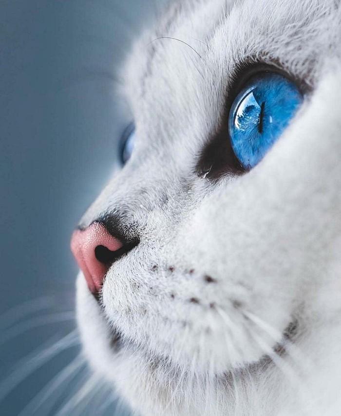 Глубокие синие глаза